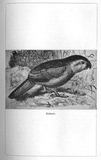 ENZB - 1907 - Wilson, J  A  The Story of Te Waharoa