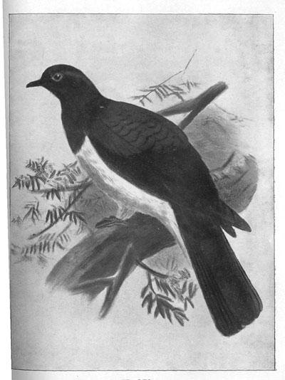 ENZB - 1907 - Wilson, J  A  The Story of Te Waharoa   Sketches of